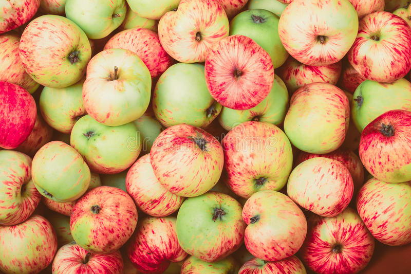 Natural background of yellow-red seasonal apples. Toned.  stock photo
