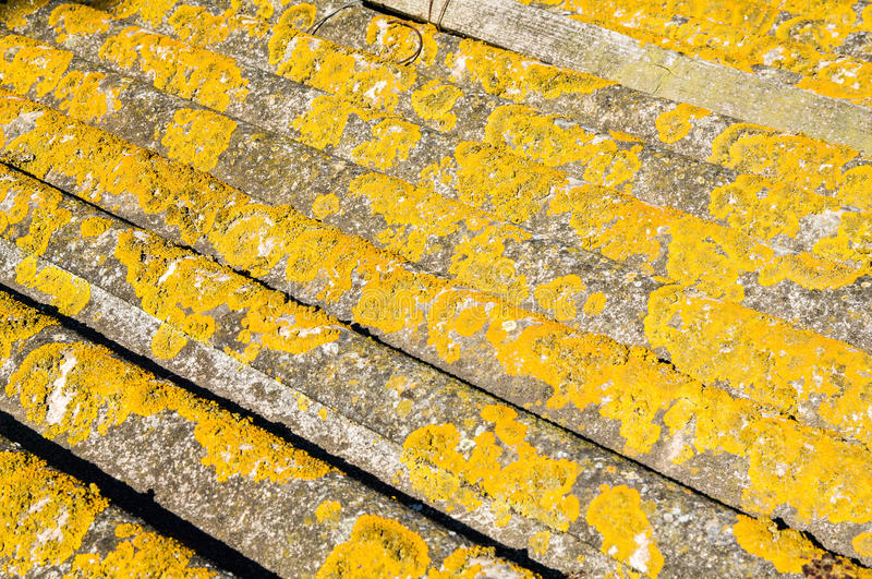 Natural backgrounds. Crustose Lichens royalty free stock images