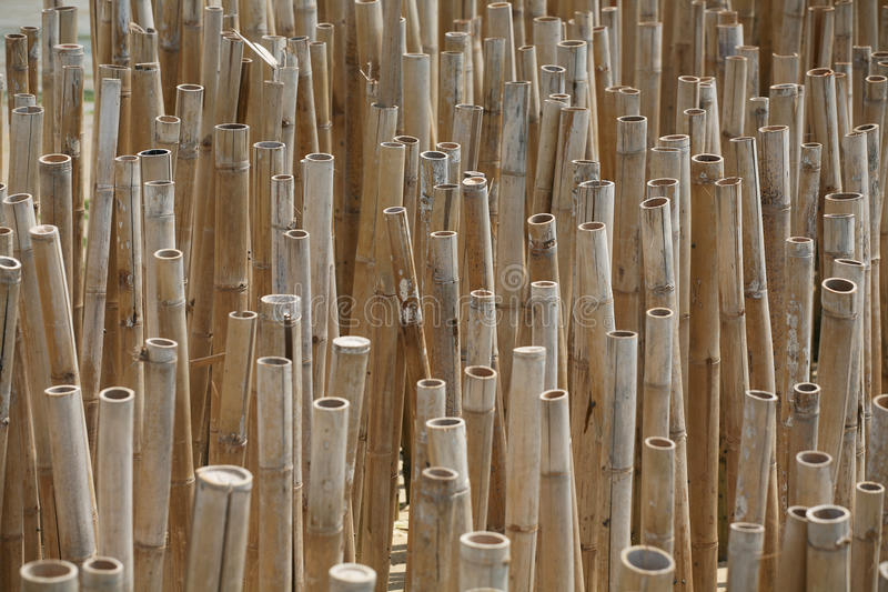 Download Natural bamboo trees stock photo. Image of culture, forest - 24811538