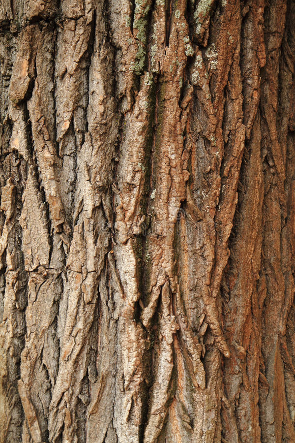 Natural bark texture. As very nice background stock photo