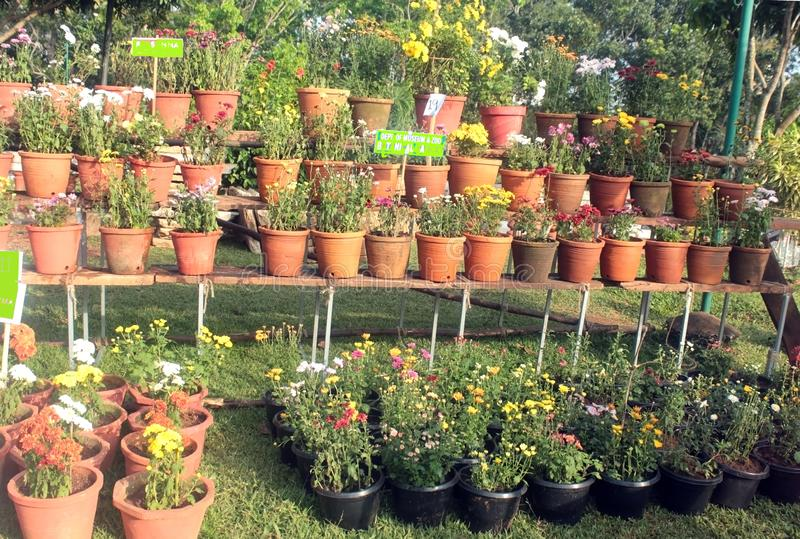 Garden Scenery at Annual Flower Fete. Natural and beautiful garden scenery arranged at an annual winter flower show in India stock images