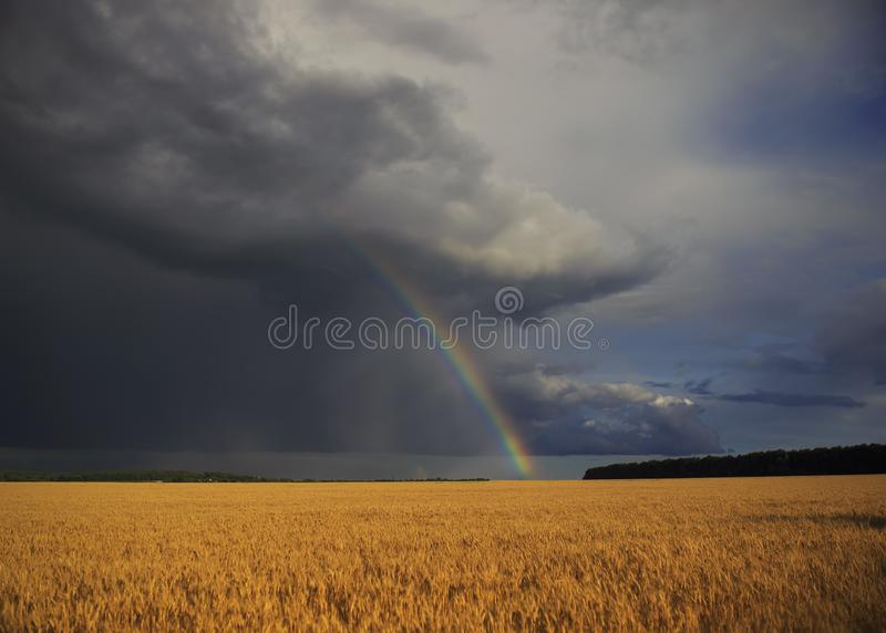 Natural beautiful landscape with blue stormy sky with clouds and bright rainbow over field of Golden ripe ears of wheat. Beautiful landscape with blue stormy sky stock photos