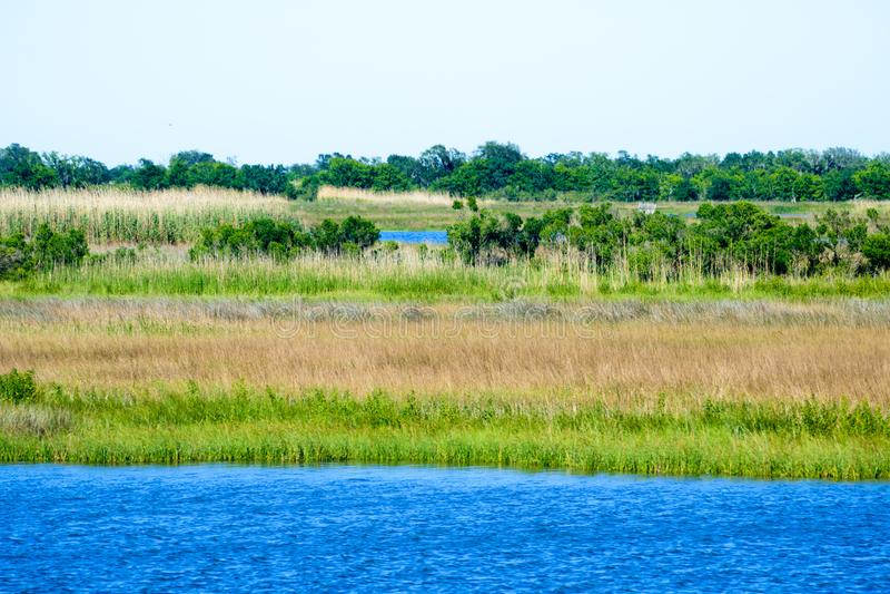Louisiana Bayou Wetlands royalty free stock images
