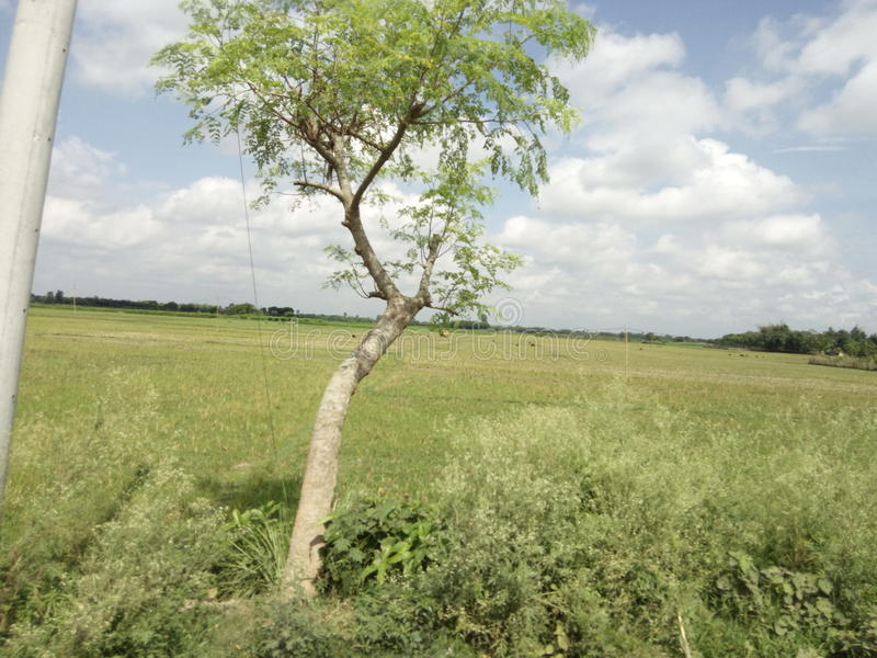 Natural beauty of Bangladesh. This is a picture of the great natural beauty stock photo