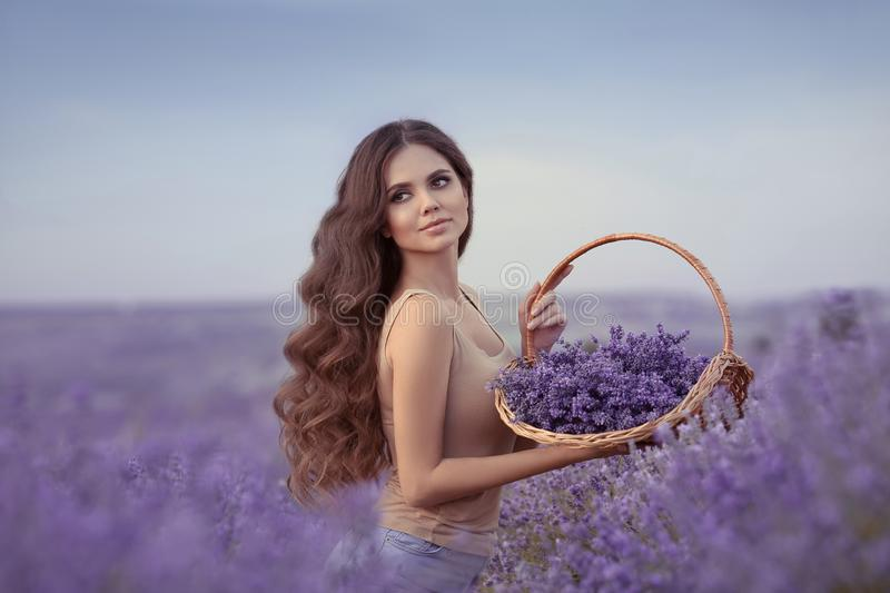 Natural beauty. Beautiful provence woman with basket flowers harvesting in lavender field at sunset. Attractive pretty girl with royalty free stock photos