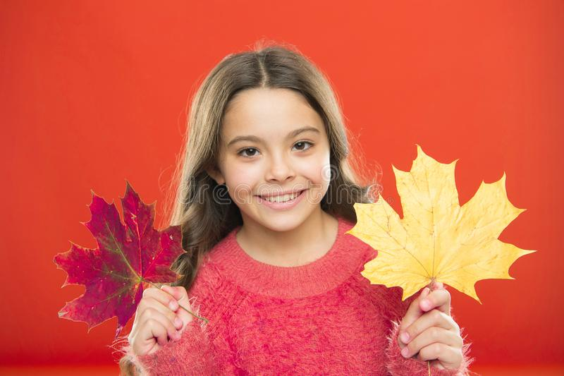 Natural beauty. Happy autumn season. Red or yellow. Seasonal change. Magic colors. Amazing autumn. Little child hold stock image