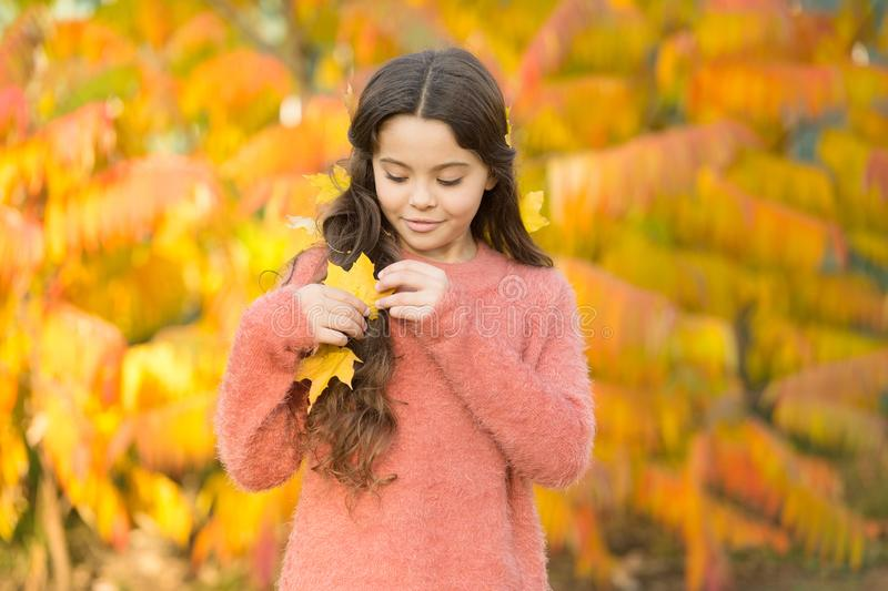 Natural beauty. Small girl wear autumn leaves in natural hair. Little child on natural landscape. Idyllic autumn nature royalty free stock images