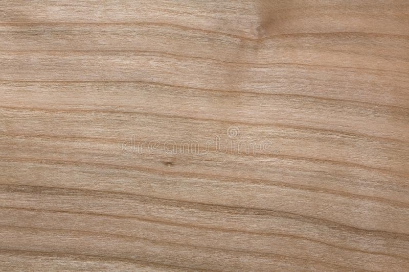 Natural beige veneer background for your new style. stock photo