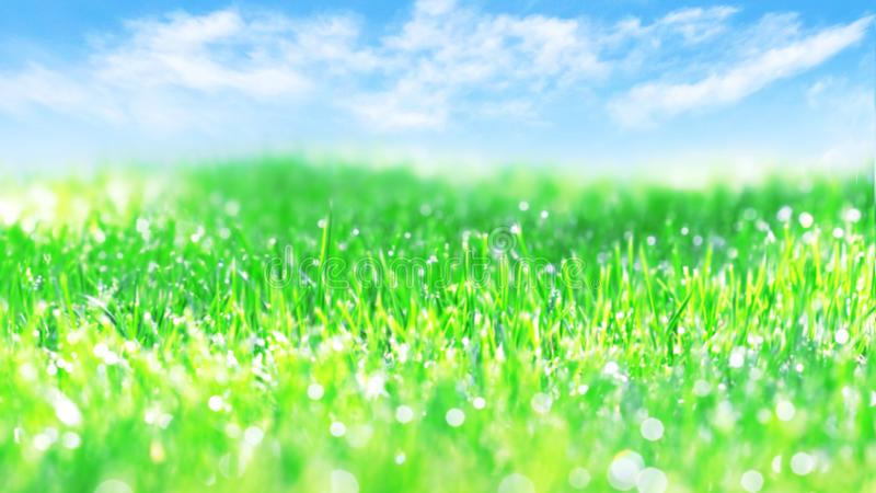 Natural blurred summer spring background. Juicy fresh green grass against the blue sky with clouds. Free space royalty free stock photography