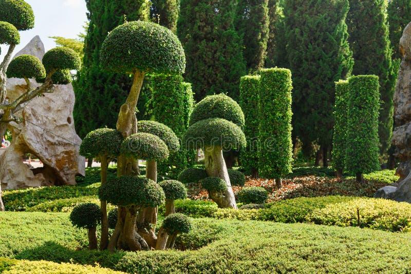 Natural bonsai tree garden Lush green parks imagen de archivo libre de regalías