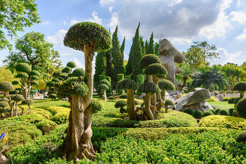 Natural bonsai tree garden Lush green parks imagenes de archivo