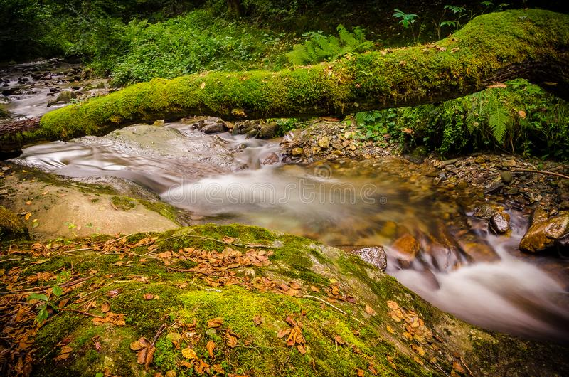 A natural bridge full of moss formed by the trunk of a tree fallen over a creek stock photography