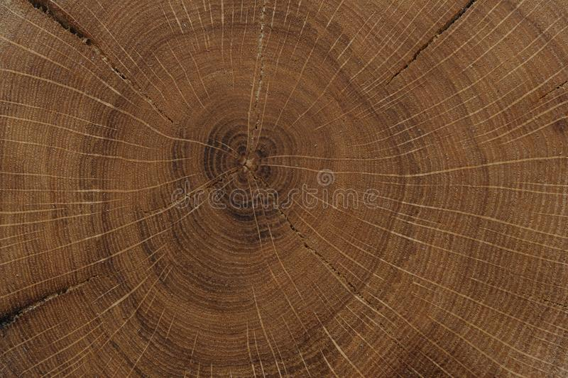 Brown oak wood texture stock photography