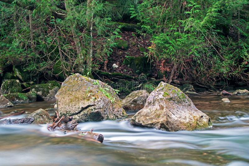 Natural Canadian Scene On The Boyne River. A moss covered rock sits solid in the fast moving waters of the Boyne River, just upstream from Hoggs Falls. The royalty free stock photos