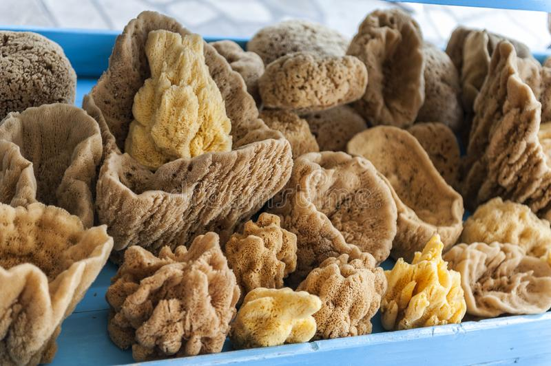 Natural coral sea sponge stock photography