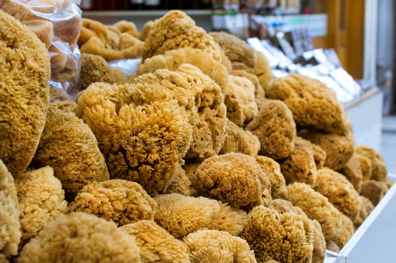 Natural coral sea sponge. Rethymno. Crete, Greece stock photos
