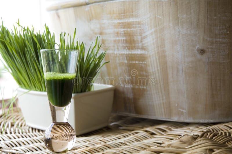Natural wheatgrass shot. Wheatgrass juice in shot glass with fresh wheatgrass background stock image