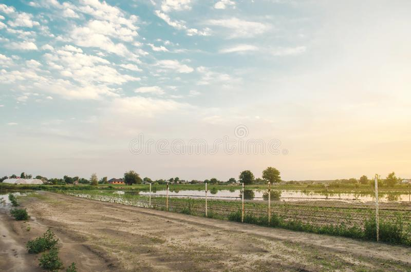 Natural disaster and crop loss risks. Flooded field as a result of heavy rain. Flood on the farm. Agriculture and farming. Ukraine. Kherson region. Selective stock photos