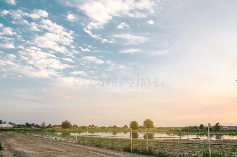 Natural disaster and crop loss risks. Flooded field as a result of heavy rain. Flood on the farm. Agriculture and farming. Ukraine. Kherson region. Selective royalty free stock photos