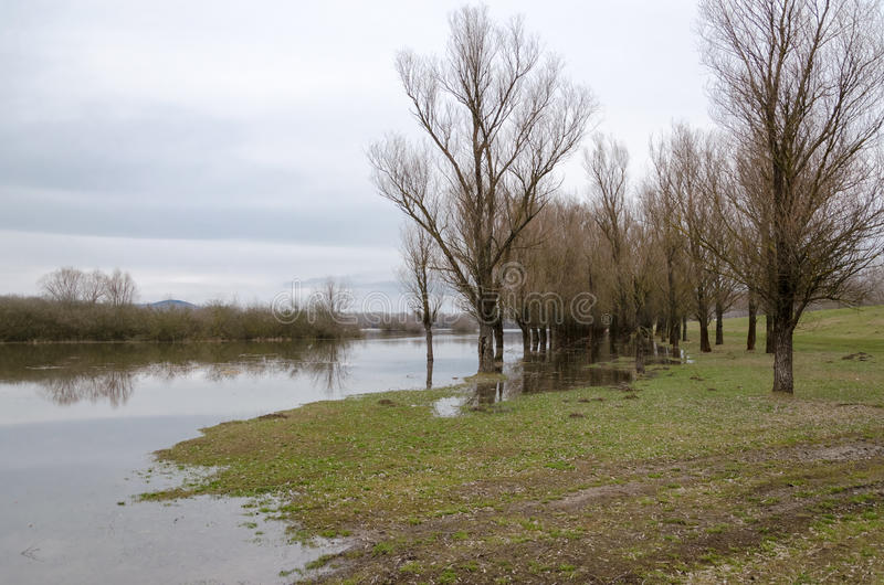 Natural disaster. Flooding of the Tisza river at Tiszalok, Hungary. Flooded forest.  royalty free stock photo
