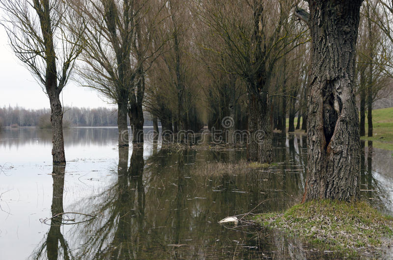 Natural disaster. Flooding of the Tisza river at Tiszalok, Hungary. Flooded forest.  royalty free stock photos