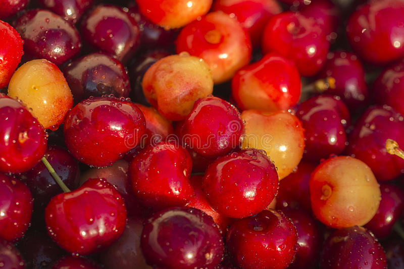 Natural domestic cherries stock images