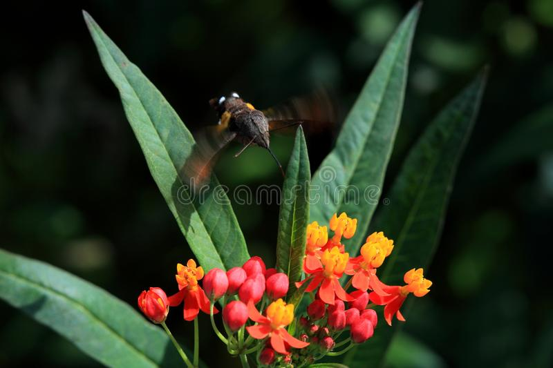 Natural dragonfly stone scenery is beautiful stock photo