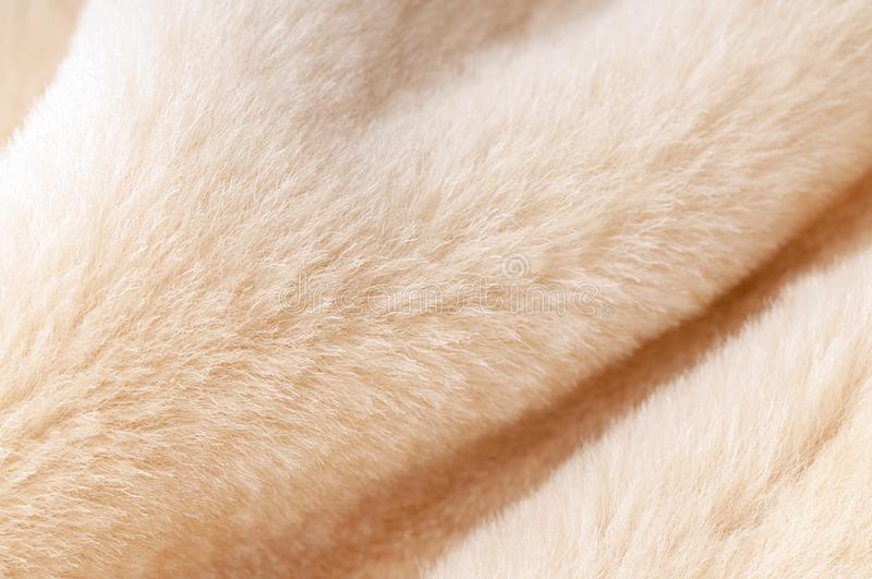 Natural dressed  beige sheepskin fur texture close-up background. Natural dressed  beige sheepskin fur texture close-up with beautiful folds background stock image