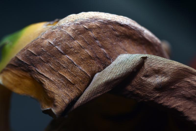 Natural dried leaves texture and form, abstract background. Macro shot royalty free stock image