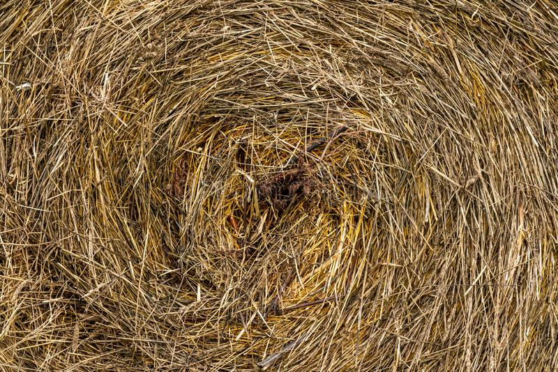 Natural dry grass or hay in a roll royalty free stock photo