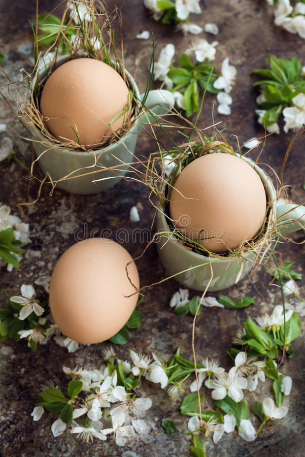 Natural easter eggs in green espresso cups, happy easter concept with white spring flowers, retro easter background stock image