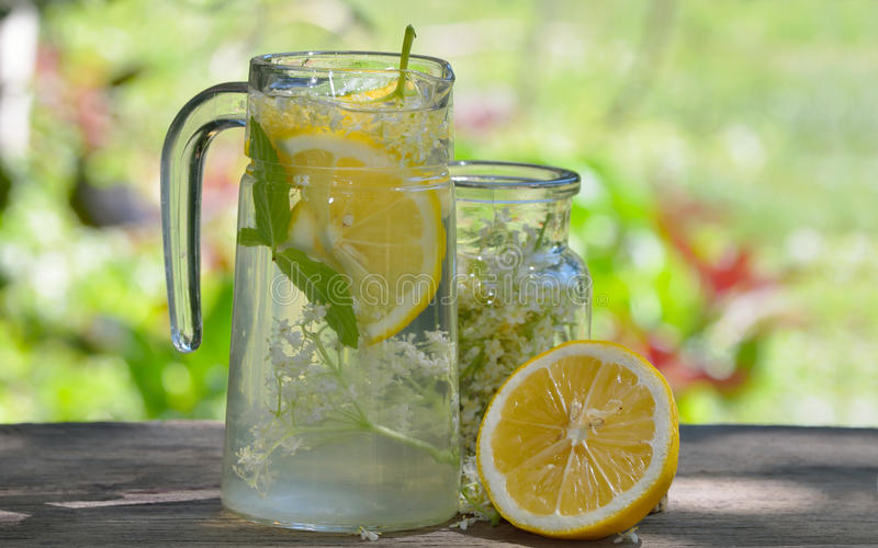 Natural elderflower juice with lemon. And elder tree flowers royalty free stock photo