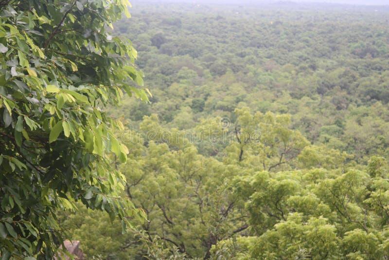 Natural environment royalty free stock photography
