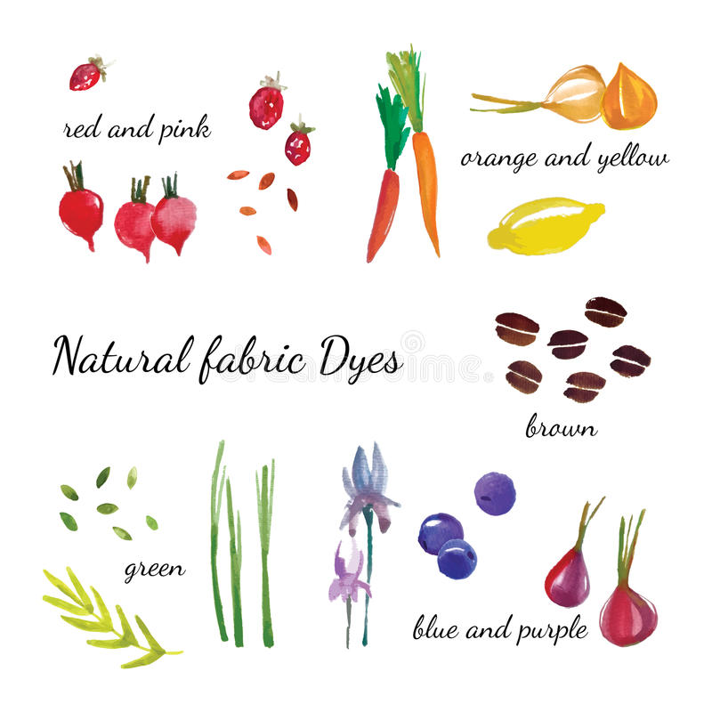 Natural fabric dyeing. Traditional cotton and silk dyeing from plants and vegetables. Vector illustration stock illustration