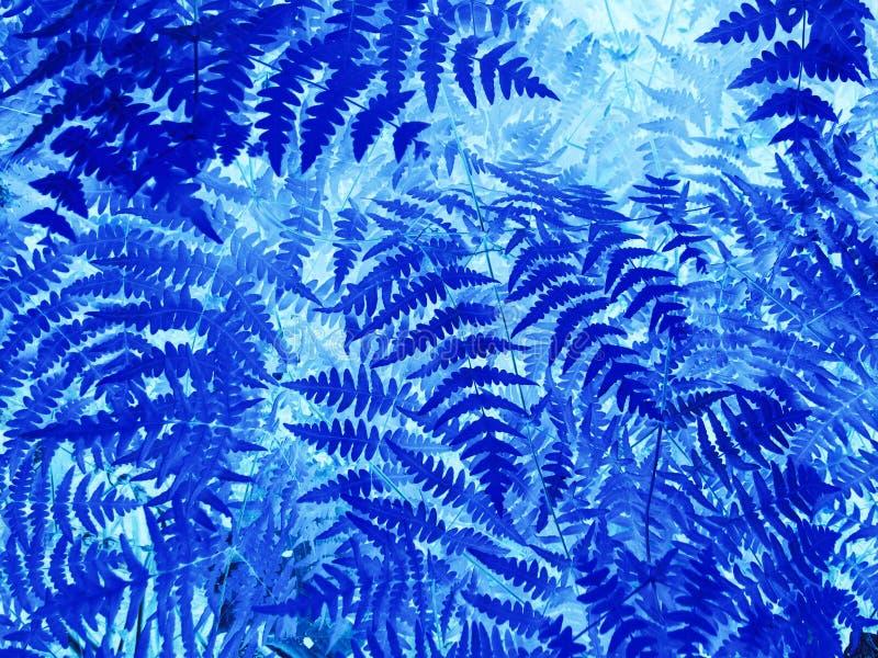 Natural fern leaf closeup. Ornament leaf blue toned photo. stock images