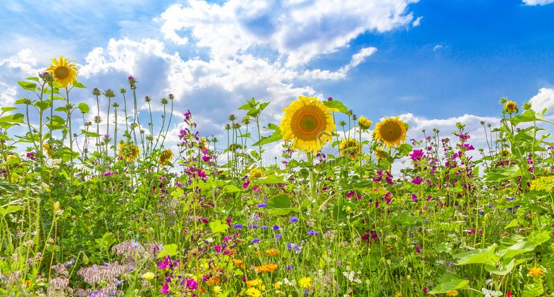Flower field in summer. Natural field with various flowersin summer royalty free stock photography