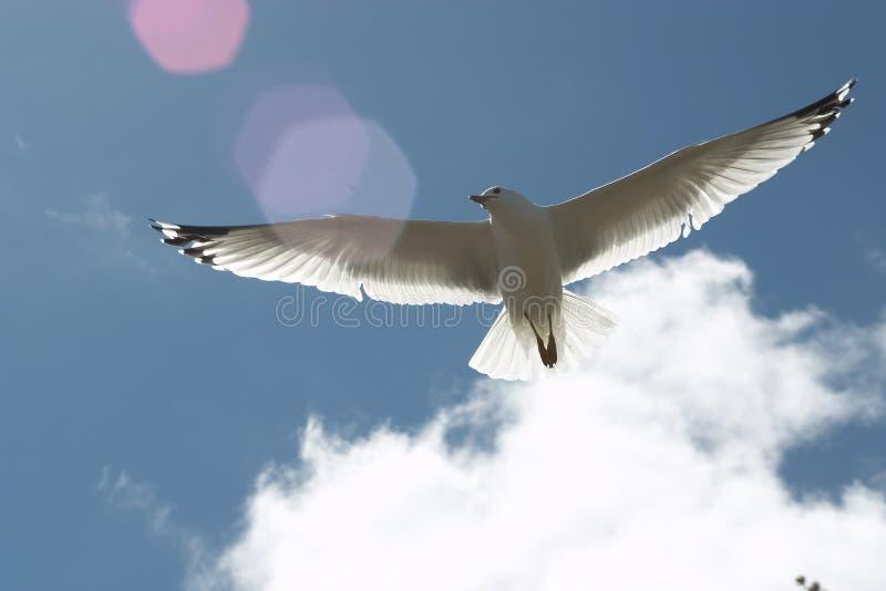 Natural Flight royalty free stock photography