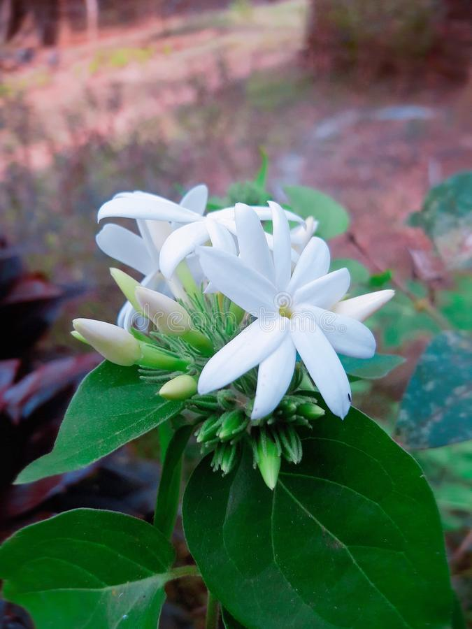 Natural flower stock image
