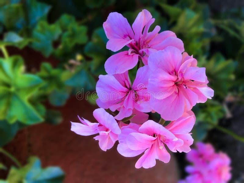 Natural Flower in Botanical Garden royalty free stock photos