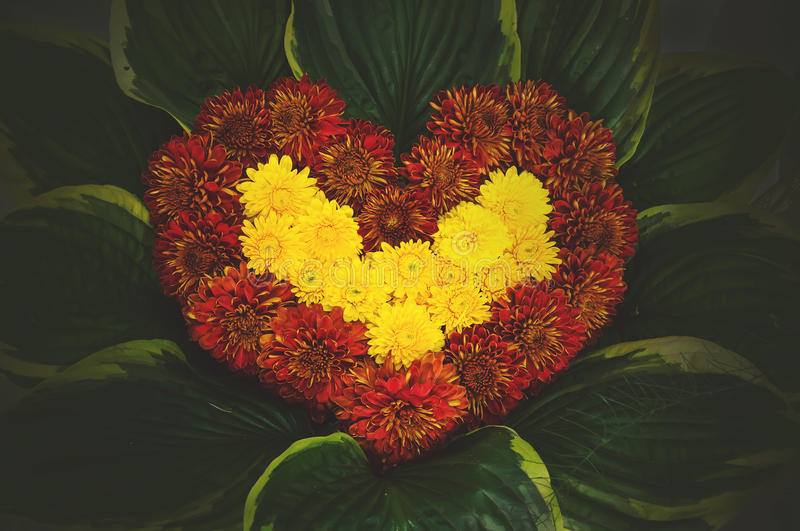 natural flower heart, made of Astra, paeony and corn flowers stock images