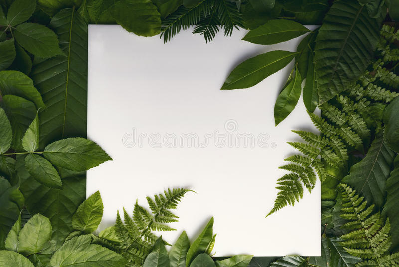Natural foliage of leaves with copy space for text royalty free stock images