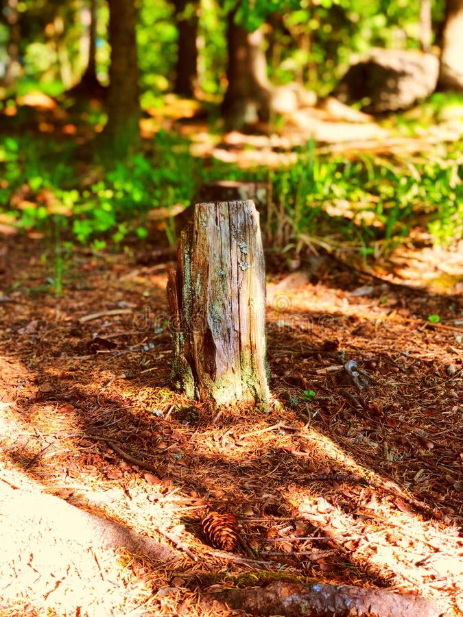 Natural forest royalty free stock images