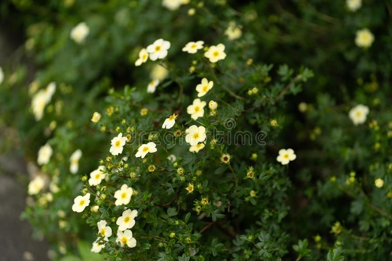 Natural forest and plants background in close up royalty free stock image
