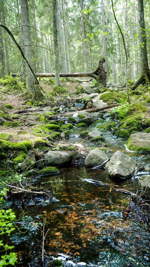 Natural forest with river in finland royalty free stock photos