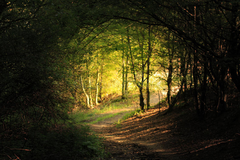Natural forest tunnel road stock photography