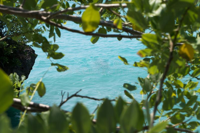 Natural Frame Formed By Tree With View On Ocean With Free Space For ...