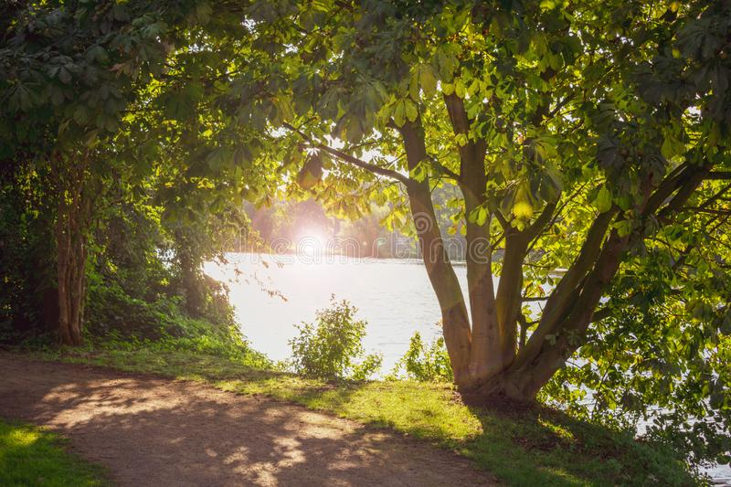 Natural frame of trees with lens flare. royalty free stock photography
