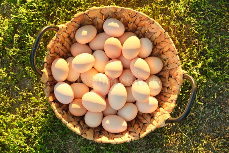 Natural fresh organic farm eggs in basket, grass background view from above royalty free stock image