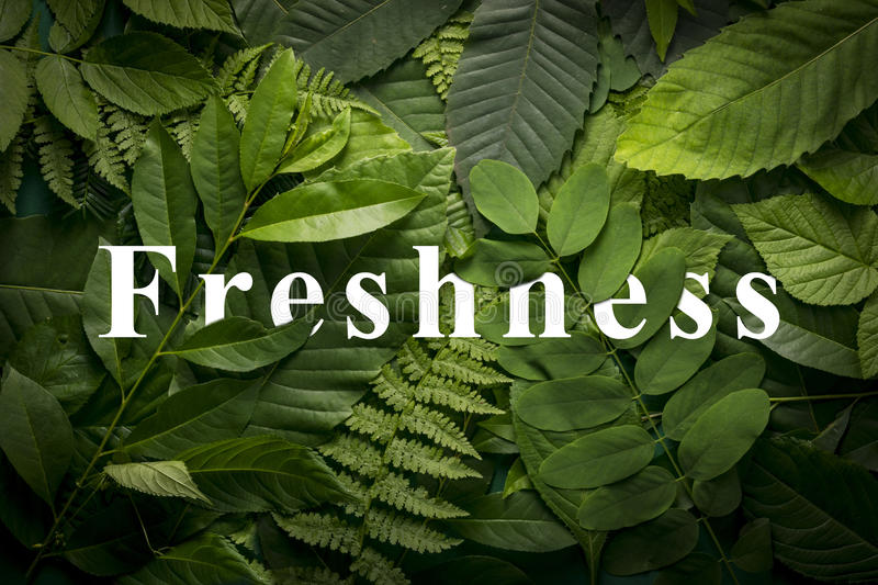 Natural freshness concept of wild green jungle foliage. royalty free stock image