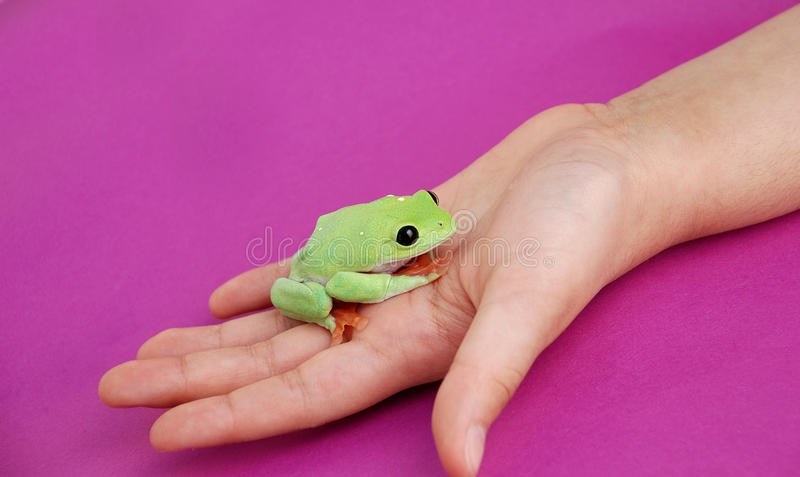 Natural Friends stock photo